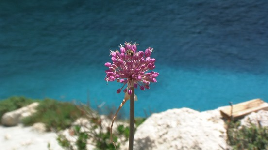 Flower at Limnionas